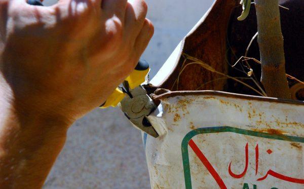 liberating olive tree